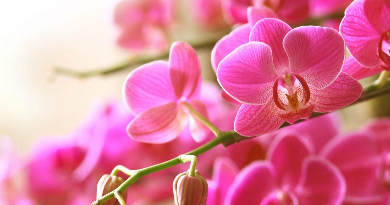 Cuidados com orquídeas em banheiros
